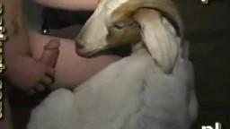 Zoo porn xxx долбень воткнул козе в лохань зоопорно частное